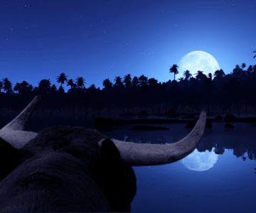 ¿Qué hacen en su tiempo libre los toros del zodiaco?
