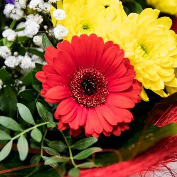 Flor para cada signo del Zodiaco